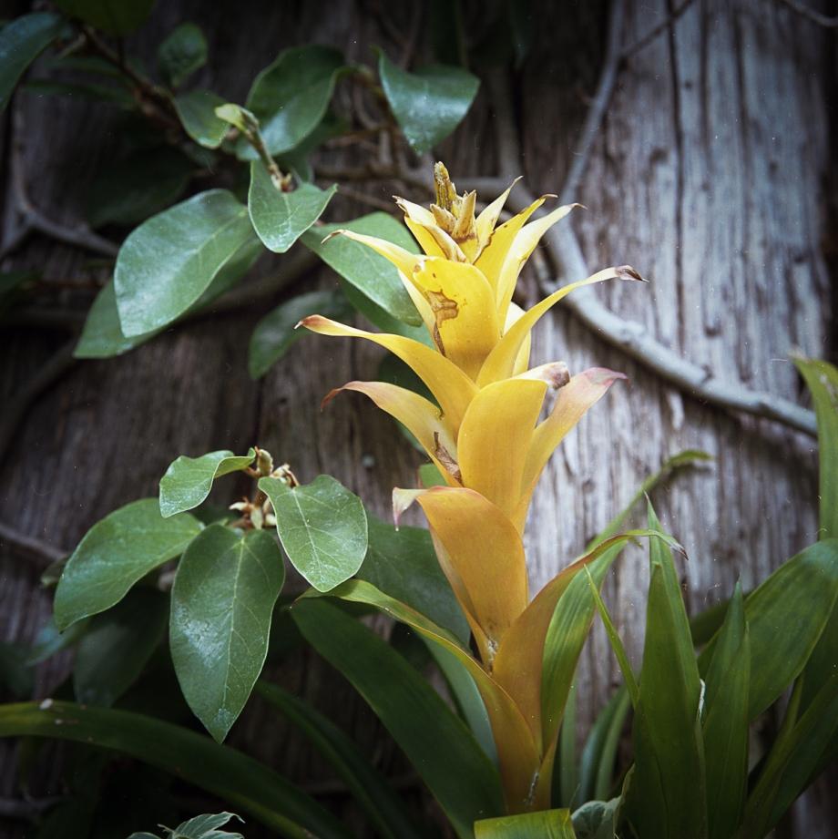 Hassy Flowers001
