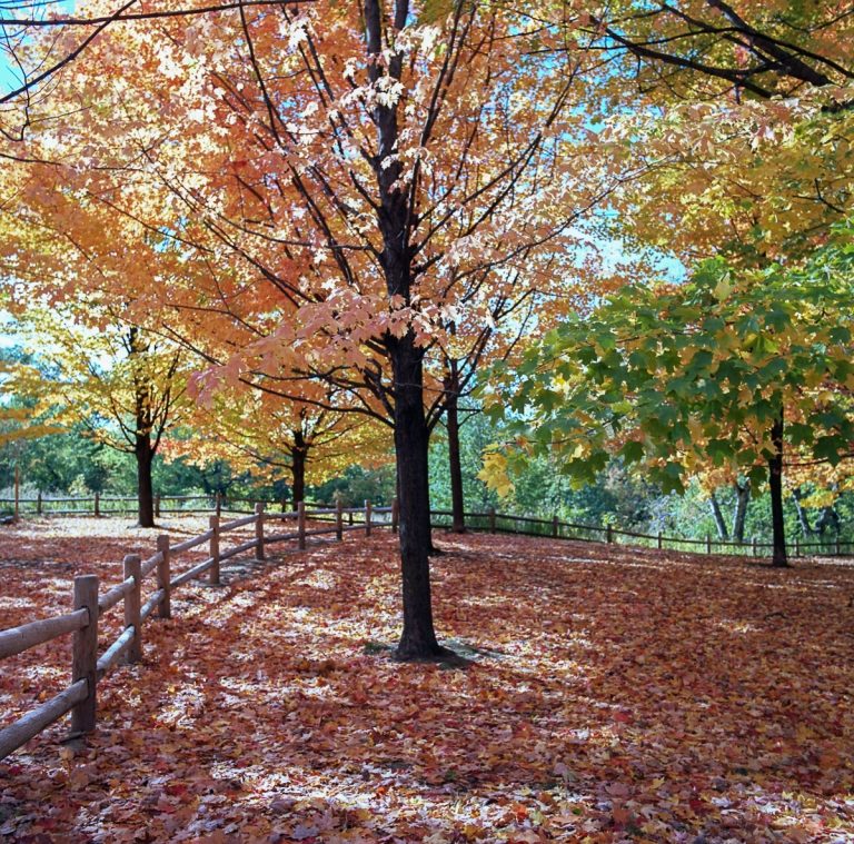 fall-hb-ektar-10-16004